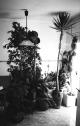 Plantes : cuina